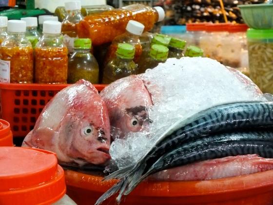 poissons morts